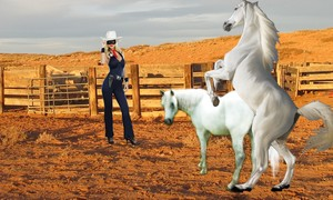 The White mustango, mustang Mare had accepted Storm Racer as her new mate