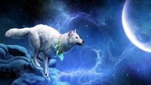 壁紙 - 狼, オオカミ