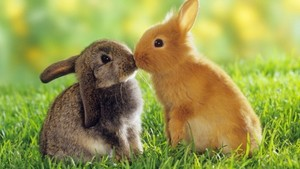 cute bunnies 500x281