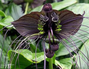 Bat hoa