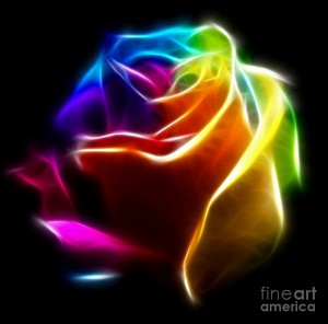 Beautiful colorful rose
