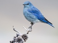 Birds - national-geographic wallpaper