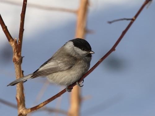 National Geographic Hintergrund titled Birds
