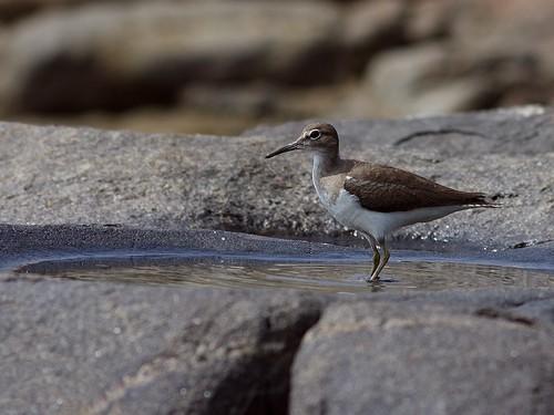 National Geographic Hintergrund called Birds