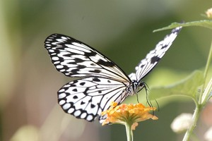Butterfly on Flower Foto