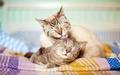 Cats - cats wallpaper
