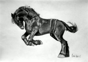My sturdy ngựa con, ngựa, pony