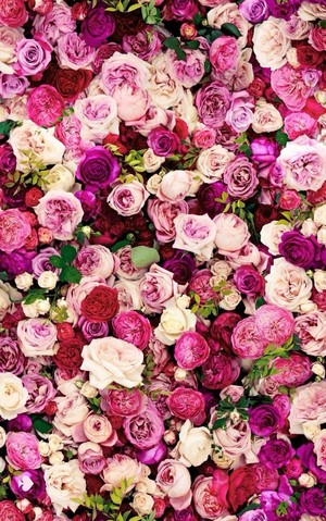 花 || Rose