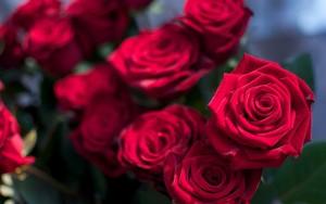 꽃 || Rose
