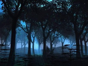 Forest at night
