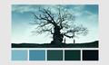 Harry Potter Color Palettes - harry-potter fan art