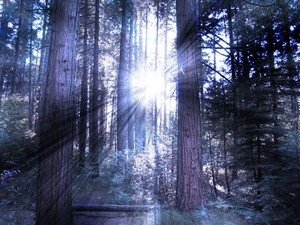 Light beaming through trees