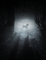 Outlast 2 - video-games photo