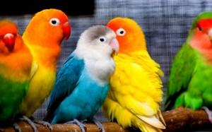parrot, kasuku