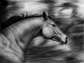 Racing - horses wallpaper