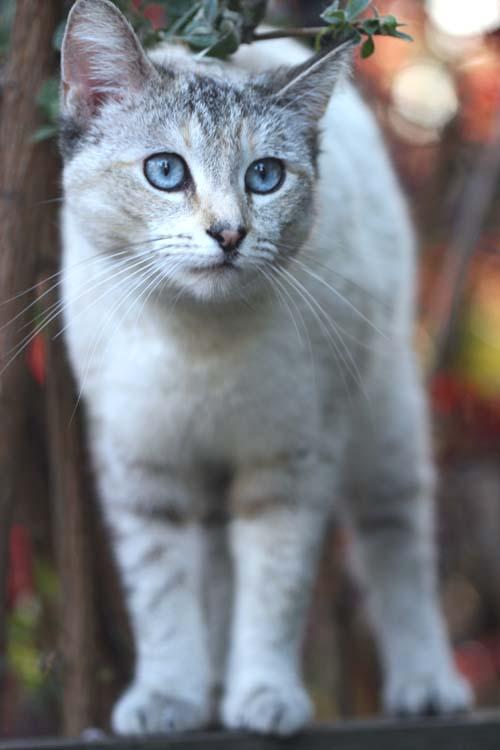 cute orange kitten names
