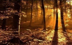 Sunbeam through trees