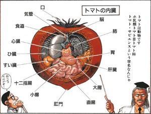 トマト anatomy
