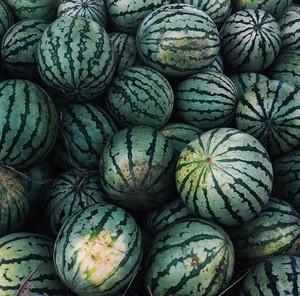 pastèque, melon d'eau