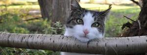 contribution au concours foto chats d ici et d ailleurs