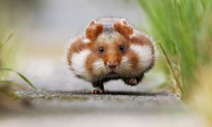 cute hamsters 1 880