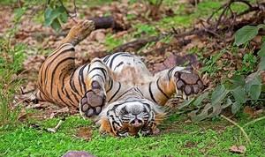 m Parambikulam Wildlife Sanctuary 1.jpg