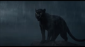 Bagheera - jungle-book photo