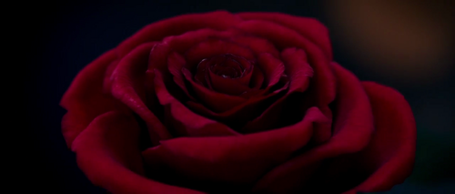Beauty and the Beast (2017) Hintergrund possibly containing a rose and a red cabbage entitled Beauty and the Beast (2017) Trailer