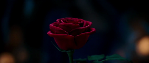 Beauty and the Beast (2017) wallpaper with a begonia, a rose, and a camellia entitled Beauty and the Beast (2017) Trailer