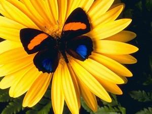 تیتلی on a پھول