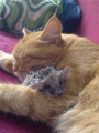 Cat and Hedgehog - cats photo