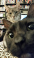 Cats - cats photo