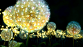Dandelions Wallpaper - the-princess-and-the-frog wallpaper