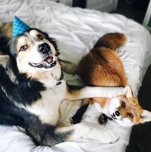 Dog and শিয়াল