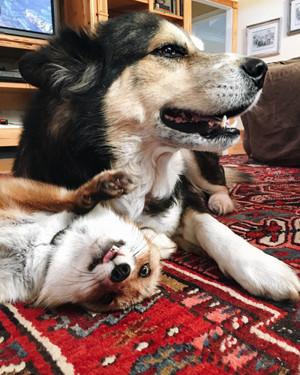 Dog and 狐, フォックス
