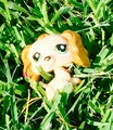 Izzy in grass - littlest-pet-shop-club photo