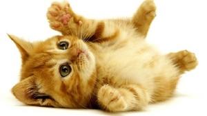Kitten :)