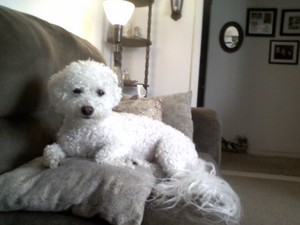 My Molly