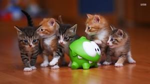 Om Nom and... Kittens!