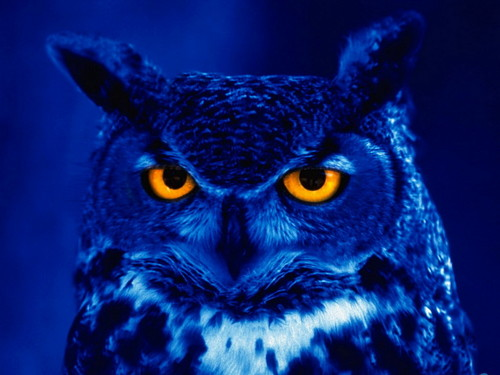 Owls fond d'écran containing a horned owl and a great horned owl entitled Owl in Blue Light