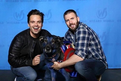 Chris Evans & Sebastian Stan fond d'écran titled Sebastian and Chris ft. dog