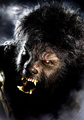 The Wolf Man - horror-movies photo