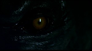 Werewolf Eye