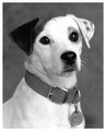 Wishbone: Head Shot - wishbone photo