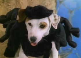 Wishbone as Anansi