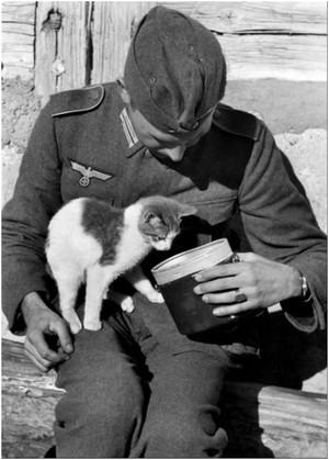 german soldier feeding a cat