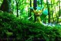 Pokémon Photography: Leafeon - pokemon photo
