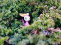 Pokémon Photography: Deerling - pokemon photo