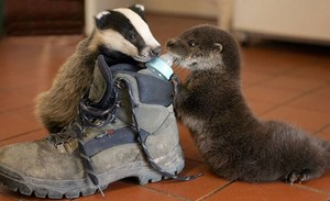 Badger and the Otter