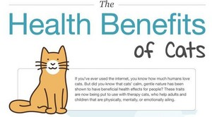 Benefits Of Having A Cat